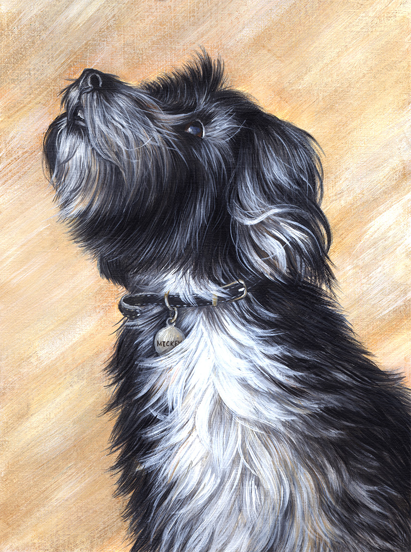 Mickey dog pet portrait - redeuced size.jpg